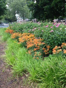 4-23-15-Claude Allison Park Rain Garden_Redford Twp._ taken July 2014 by Carl Van Aartsen