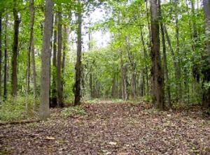 5-7-15-Nature trail at Huber Park